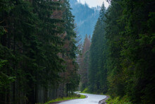Curve Road In A Mountain Forest