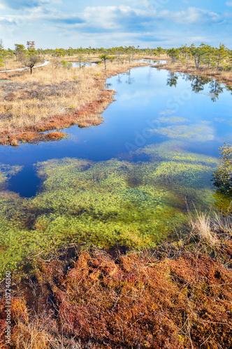 Fotografía Beautiful waterscape in the swamp