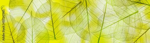 Türaufkleber Makrofotografie a leaf texture close up
