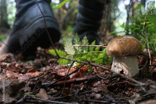 Fotografie, Obraz boletus mushrooming man
