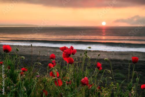Plakat Seascape with makpies Wspaniały wschód słońca widok z pięknymi makami na plaży w pobliżu Burgas, Bułgaria