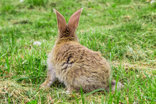 View Of Rabbit From Behind