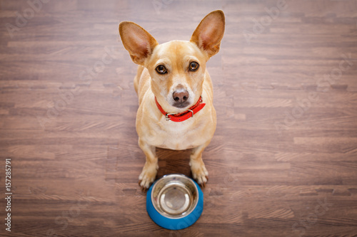 Aluminium Prints Crazy dog hungry dog with food bowl