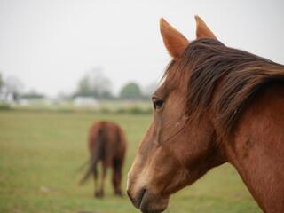 Thoughtful horse