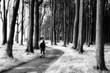 canvas print picture - Gespensterwald Nienhagen Wanderer