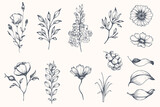 Fototapeta Kwiaty - Vector collection of hand drawn plants. Botanical set of sketch flowers and branches