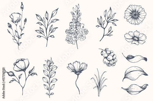 Fotografie, Tablou Vector collection of hand drawn plants