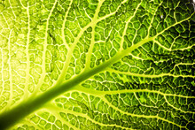 Wirsing Gemüse Kohl Grün Mak...