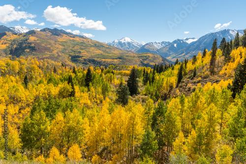 Deurstickers Herfst Golden Forest