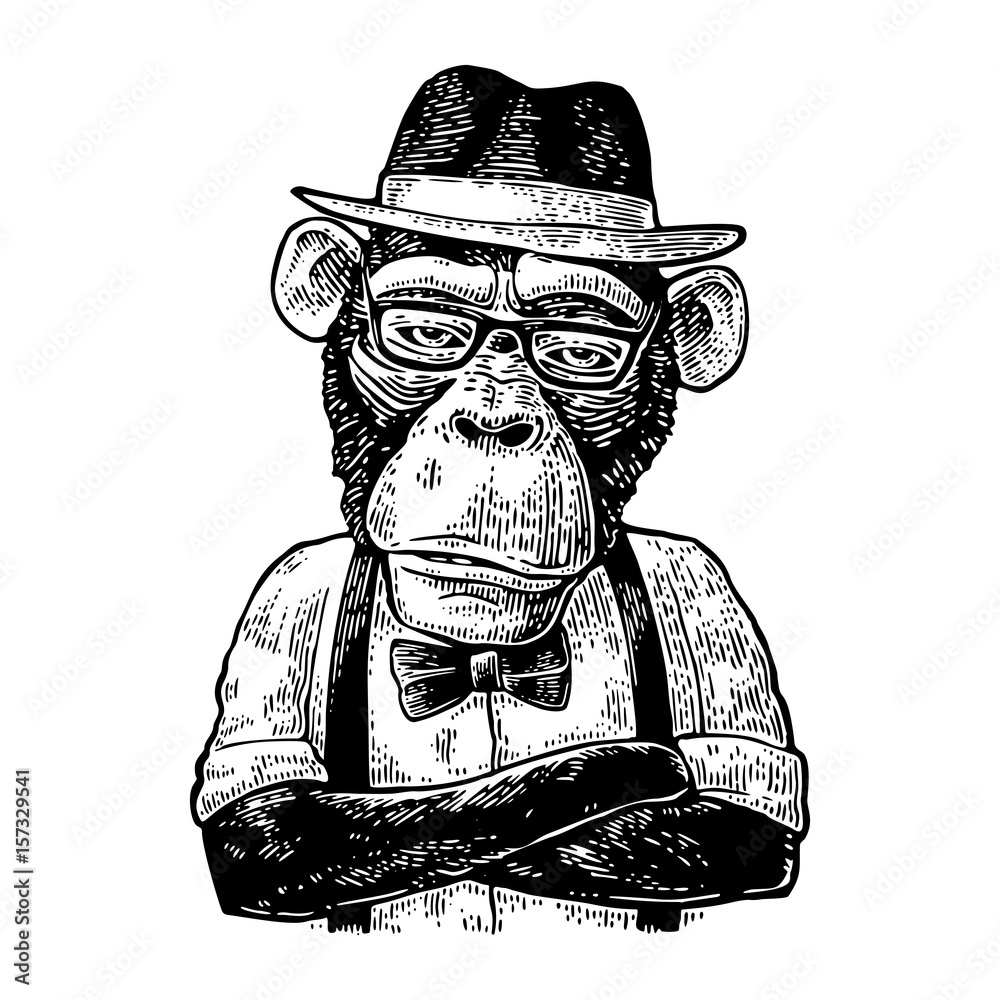 Fototapeta Monkey hipster with arms crossedin in hat, shirt, glasses and bow tie