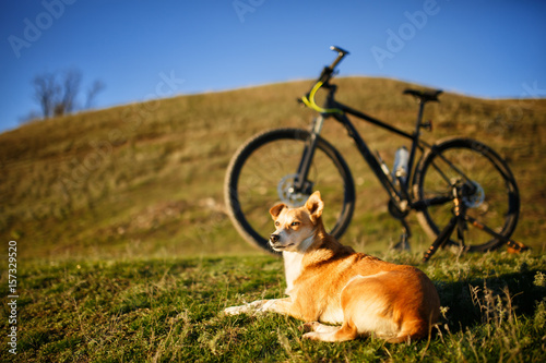 sitting red dog and mountain bicycle with greenfield background Wallpaper Mural