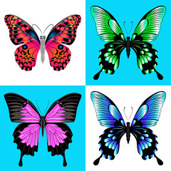 Vector illustration. Set of four butterfly.