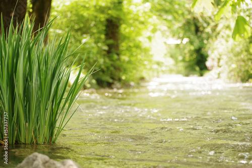 Flussufer, Natur Fototapete