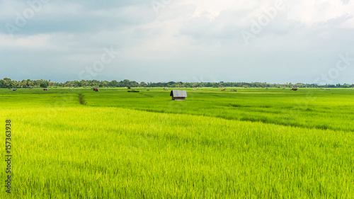 Montage in der Fensternische Lime grun Green rice field.