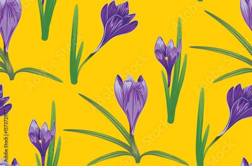 Fototapeta Purple Crocus Flowers obraz na płótnie