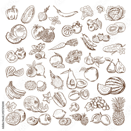 Vector hand drawn pictures of fruits and vegetables. Doodle vegan food illustrations Wall mural