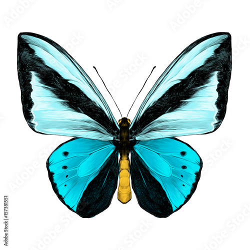 Fototapeta butterfly symmetric top view of light blue and blue colors, sketch vector graphics color picture