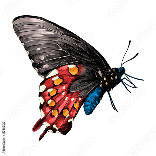 Fototapeta butterfly with a blue body, red and grey wings and orange patches on the wings side view, sketch vector graphics color picture