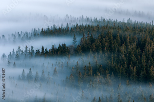 Poster Morning with fog Foggy landscape. Foggy valley of Sumava national park. Detail of forest, Boubin mountain of Czech Republic.