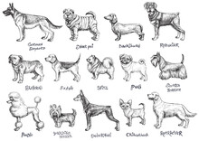 Dogs Breeds Vector Set.
