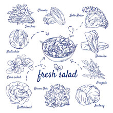 Doodle Set Of Fresh Salad - Sonchus, Chicory, Lollo Rosso, Radicchio, Corn, Romaine, Arugula, Green Oak, Butterhead, Iceberg, Hand-drawn. Vector Sketch Illustration Isolated Over White Background.