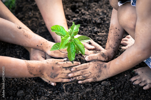 Fototapeta  Children and parent hand planting young tree on black soil together as save worl
