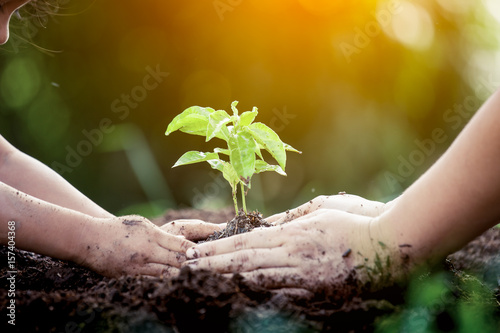 Fotografie, Obraz  Child and parent hand planting young tree on black soil together as save world c