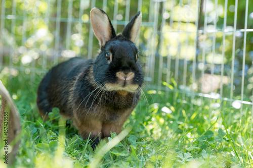 Kaninchen Im Garten Buy This Stock Photo And Explore Similar