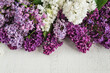 lush multicolored bunches of lilac on white wooden background