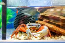 Crab In The Aquarium