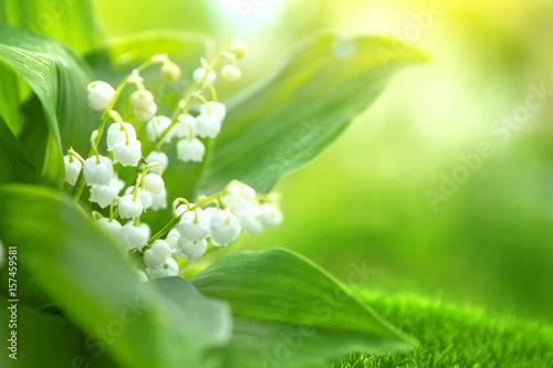Deurstickers Lelietje van dalen Spring flowers lilies of the valley in morning