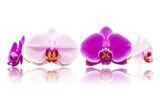 Mix storczyki orchidee białe i różowe kwiaty izolowane odbicie lustrzane