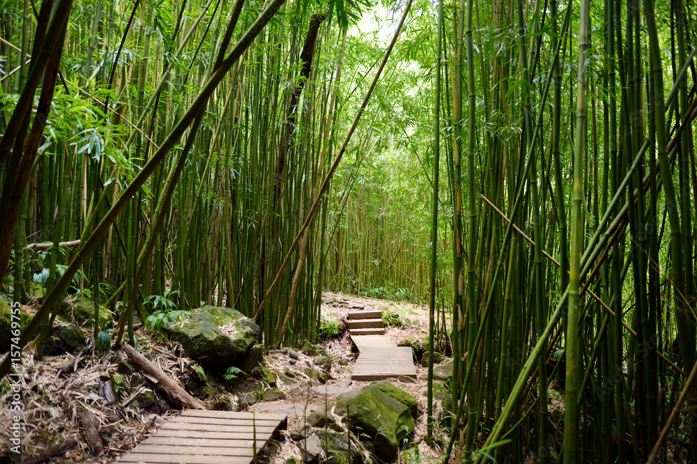 Path through dense bamboo forest, leading to famous Waimoku Falls. Popular Pipiwai trail in Haleakala National Park on Maui, Hawaii.