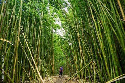 Foto op Plexiglas Bamboe Path through dense bamboo forest, leading to famous Waimoku Falls. Popular Pipiwai trail in Haleakala National Park on Maui, Hawaii.