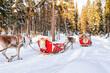 People on Reindeer caravan safari in winter forest in Rovaniemi
