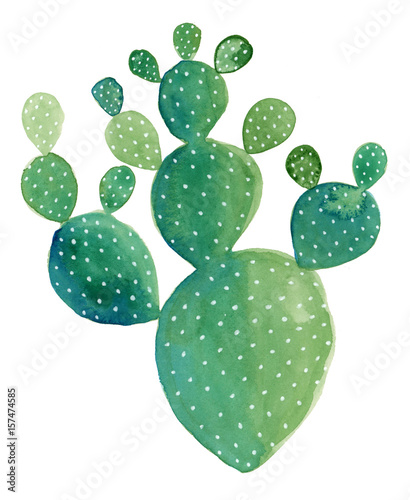 akwarela-malarstwo-kaktusa-opuntia-quot-pad-cactus-quot