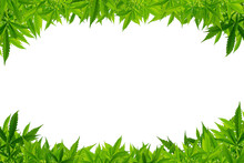 Marijuana Frame With White Blank Space.