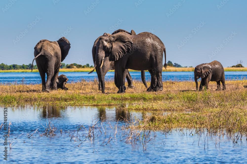 Africa. Herd of elephants