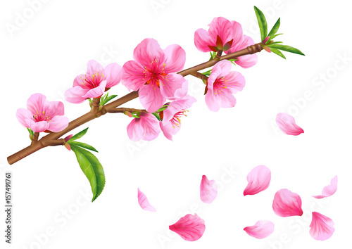 Flowering branch of peach. Vector. Poster
