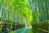Fototapeta Bambus - 京都 竹林と小道
