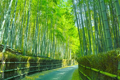 In de dag Kyoto 京都 竹林と小道