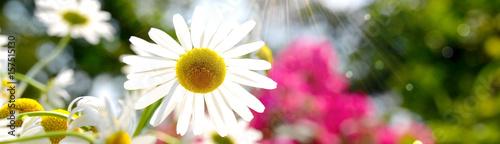 Plakat Letnie kwiaty - panorama tła - czas na zewnątrz w ogrodzie