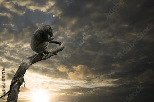 Foto op Aluminium Aap Auf Ast sitzender Affe blickt in ungewisse Zukunft