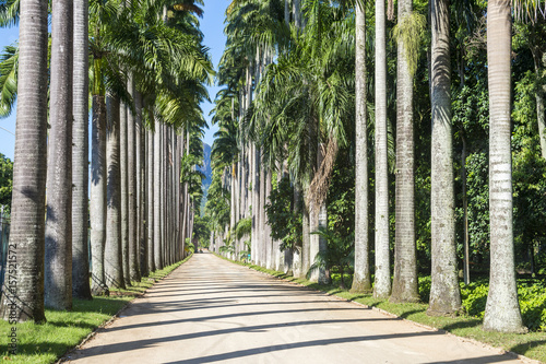 Shadows make patterns along the dusty surface of a long scenic avenue of tall royal palm trees in Rio de Janeiro, Brazil