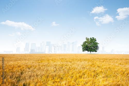 Fotografie, Obraz  campagne champ arbre ville population vivre habitation concentration capitale la