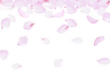 Falling Rose Petals Soft Delic...
