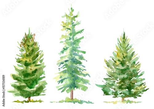 Spruce border Canvas Print