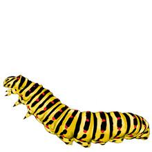 Yellow Caterpillar Crawling, S...