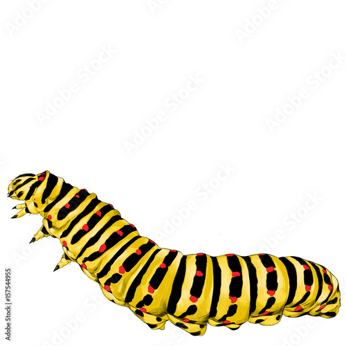 Fotomural yellow caterpillar crawling, sketch vector graphics color picture