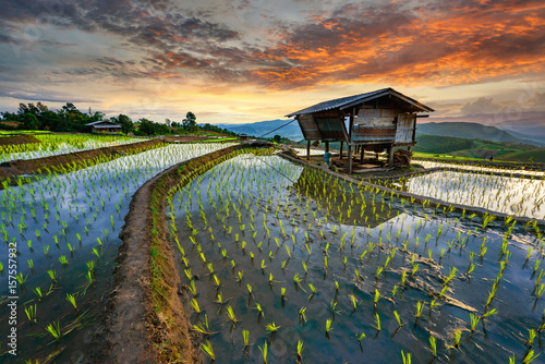 Rice terrace rice field of Thailand, Pa-pong-peang rice terrace north Thailand,Thailand landscape,Thailand